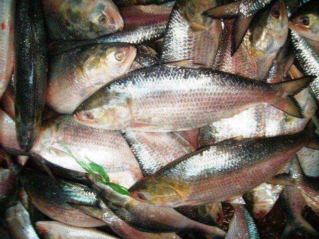 National Fisheries Week begins on July 18