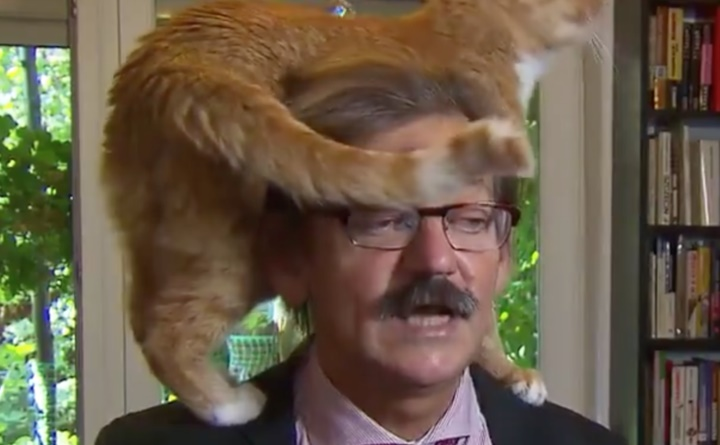 Cat climbs on professor during TV interview but he remains unfazed (Video)