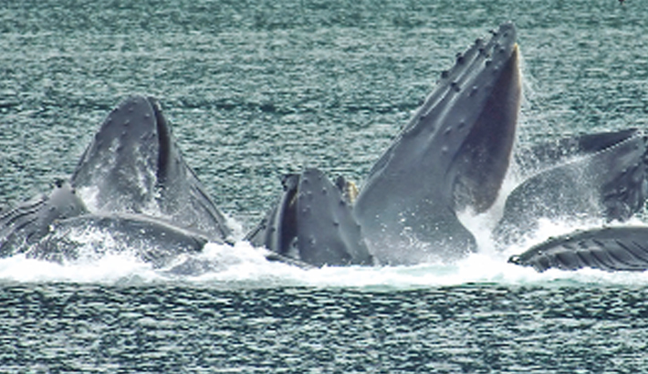 Did ancient Romans whale the Mediterranean?