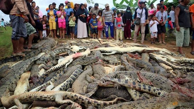 Angry mob slaughters nearly 300 crocodiles in Indonesia in revenge attack