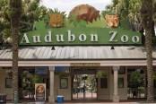 Eighth animal dies after jaguar escapes Audubon Zoo habitat