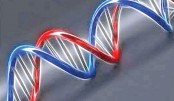 Gene-editing damages DNA more than previously thought