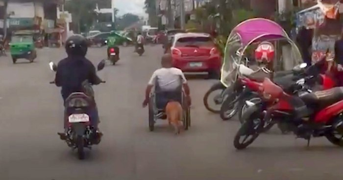 Dog Pushes Paralysed Owner's Wheelchair
