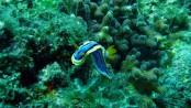 Australia announces plans to save Barrier Reef