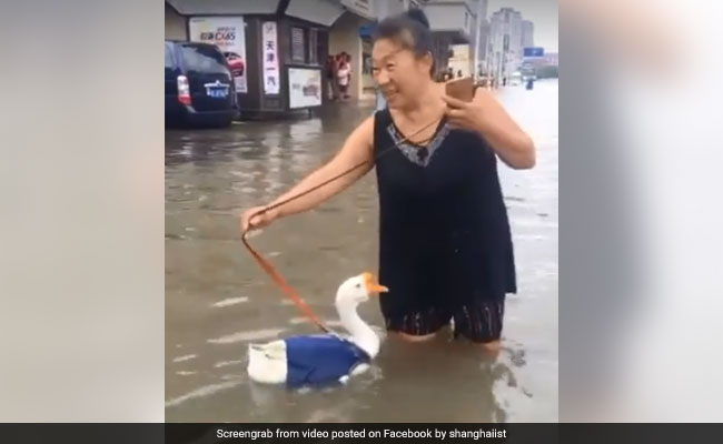 Video of woman taking goose for 'walk' on flooded road amuses internet (Video)