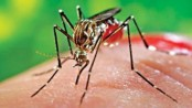 Aedes larvae found in 45 percent houses in DSCC Zone-1: Mayor