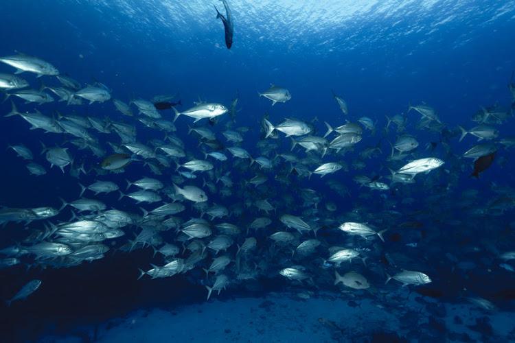 Untouched marine habitats could vanish within half a century
