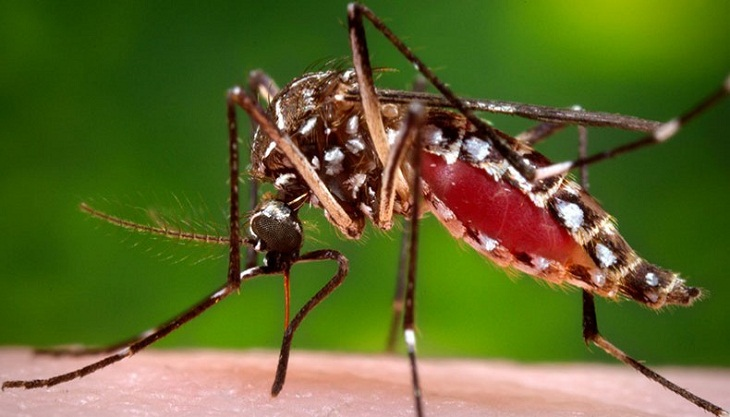 Stay alert to dengue, doctors advise
