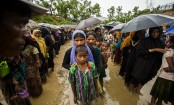 Desperately need more funding to help Rohingyas: IOM