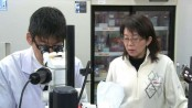 Japan human trial tests iPS cell treatment for Parkinson's