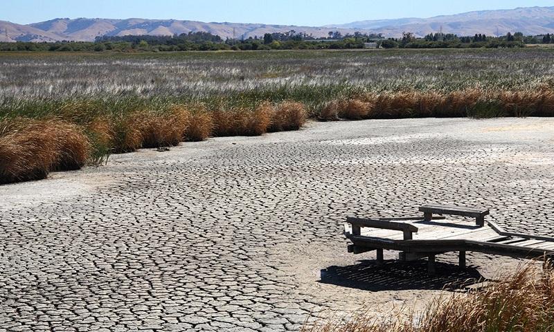 Record-breaking heatwave leaves 29 dead in South Korea
