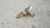 Snake filmed eating pigeon in London street