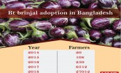 A fifth of brinjal farmers adopt Bangladesh's first GM food crop