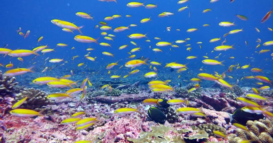 Marine heat waves can wreak havoc on wildlife