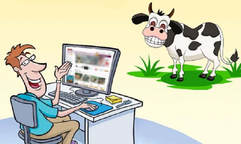 Online cattle-trading gathers pace alongside traditional markets