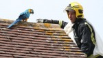 Parrot curses out firefighters trying to rescue it from roof