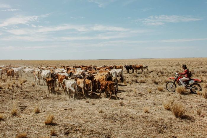 Australia ramps up aid to farmers as drought bites