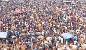 Gabtali cattle market