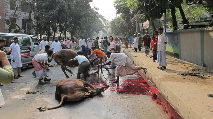 Slaughtering everywhere; government advice goes unheeded
