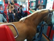 Photos of man trying to board train with horse go viral