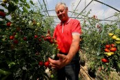 French tomato grower takes on Monsanto over weedkiller