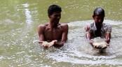 VGF rice found in Jhenaidah ponds