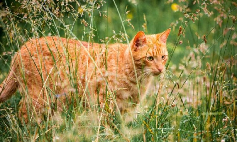 Why a village in New Zealand is trying to ban all cats