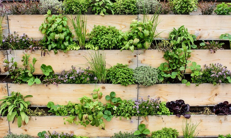Dig into the best versatile herbs in your kitchen garden