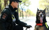 South Korean police to honour dog killed in the line of duty by snake