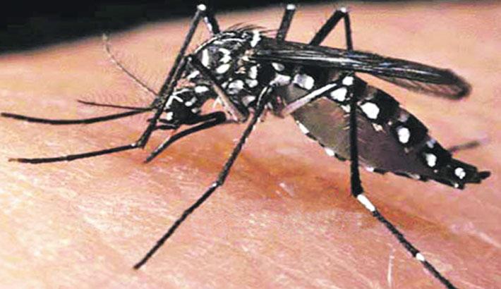 Dengue turns alarming in capital
