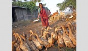 Duck farming makes her self-reliant