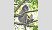 Lawachhara wildlife  in danger