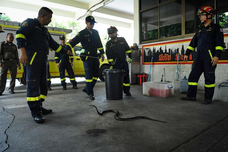 With few blazes to fight, firefighter at north Bangkok station spends time catching snakes in people's homes