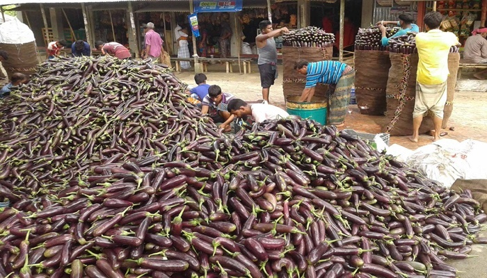 Faridpur farmers tell the tale of successful brinjal farming