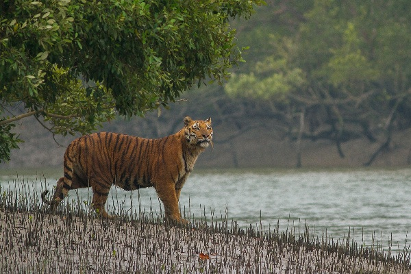 Sundarbans wildlife gets extended sanctuary
