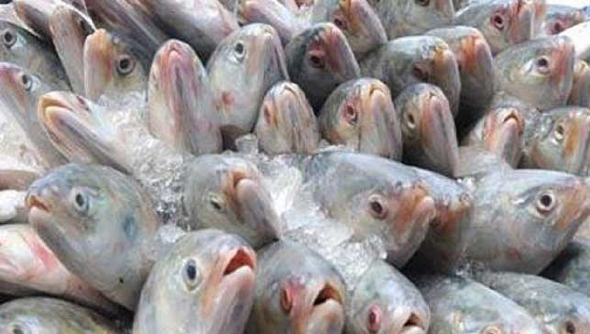 Hilsa output expected to exceed 5 lk MT in 2017-18 FY: Minister