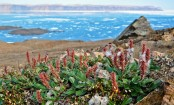 Taller plants moving into warmer Arctic