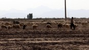 Iran risks losing 70pc of farmlands: environment chief