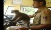 India suspends bus driver for letting a monkey 'drive'