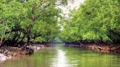 National Committee demands halt in 'anti-Sundarbans' projects