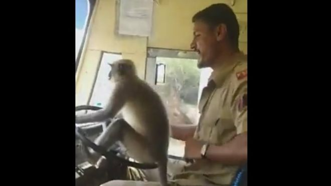 Monkey 'driving' bus in India (Video)