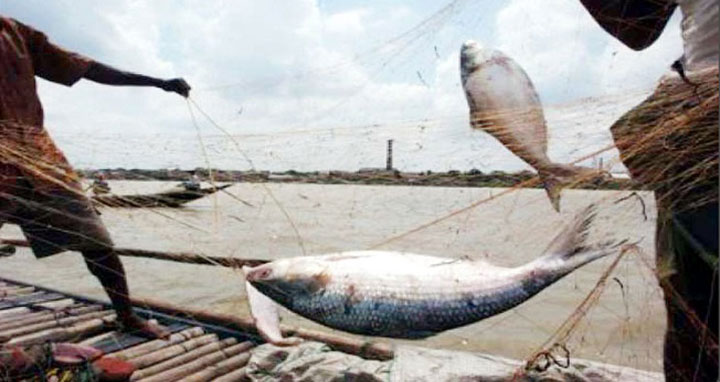 Fishermen ready to go back to Bay as Hilsa ban goes from Monday
