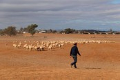 'Big dry' drags on as Australia sets up drought-proof fund