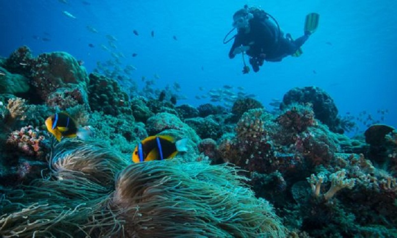 Coral: Palau to ban sunscreen products to protect reefs