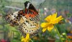 Jahangirnagar University Butterfly Fair attracts nature enthusiasts