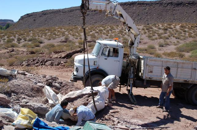 New dinosaur species unearthed in Argentina