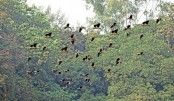 Flock of  Migratory birds are flying
