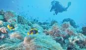 Palau plans sunscreen  ban to save coral