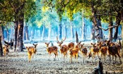 Authorities plan 3-month ban on tourism in Sundarbans