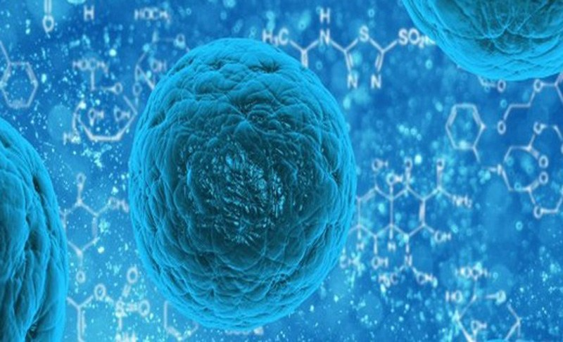 Tumour immune cells can aid cancer therapies, says study